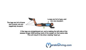 Body Composition and diving trim